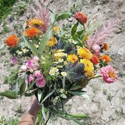 fleurs_divers_8